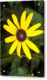 Acrylic Print featuring the photograph The Beauty Of A Single Daisy by Shawn Hughes