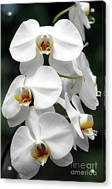 The Beauty Of Orchids  Acrylic Print