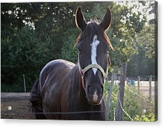 The Beauty Of The Horses Acrylic Print by Valia Bradshaw