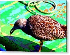 The Bird Acrylic Print by Amanda Pillet