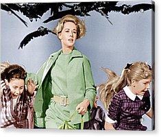 The Birds, Tippi Hedren Center, 1963 Acrylic Print by Everett