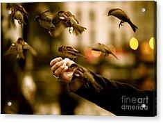 The Birds Acrylic Print by Zarija Pavikevik