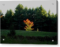 The Blazing Tree Acrylic Print