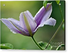 Acrylic Print featuring the photograph The Bloom by Tamera James