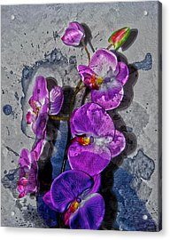 The Blue Orchid  Acrylic Print by Jerry Cordeiro