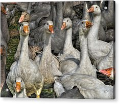 The Board Of Directors Acrylic Print by William Fields