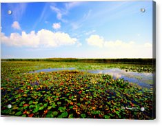 The Bog At Point Pelee Acrylic Print