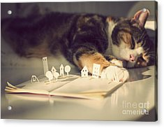 The Bookeeper  Acrylic Print by Catherine MacBride