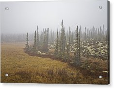 The Boreal Forest On A Foggy Day Acrylic Print by Taylor S. Kennedy