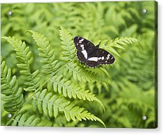 Acrylic Print featuring the photograph The Butterfly On Fern Sheet by Aleksandr Volkov