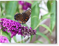 The Butterfly Tree Acrylic Print by Janet Mcconnell