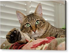 The Cat With Green Eyes Acrylic Print