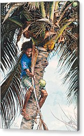 The Coconut Tree Acrylic Print by Gregory Jules