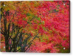 The Color Of Fall Acrylic Print by Ken Stanback