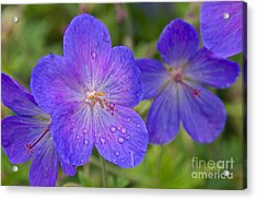 The Color Purple Acrylic Print by Sean Griffin