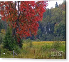 The Colors Of Fall Acrylic Print by Anne Gordon