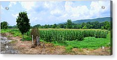 Acrylic Print featuring the photograph The Corn Field by Paul Mashburn