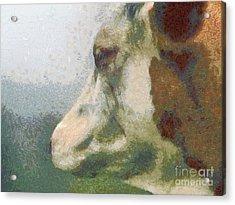 The Cow Portrait Acrylic Print by Odon Czintos