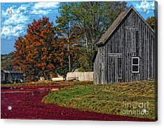 The Cranberry Farm Acrylic Print by Gina Cormier