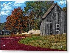 The Cranberry Farm Acrylic Print
