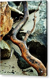 The Curving Branch Acrylic Print