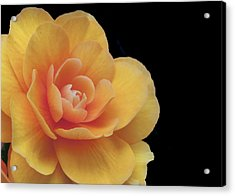 Acrylic Print featuring the photograph The Dahlia by MaryJane Armstrong