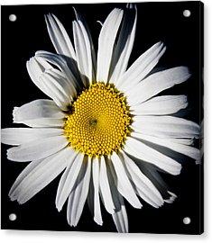 The Daisy Acrylic Print by David Patterson