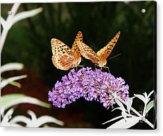 The Dancing Butterflies Acrylic Print by Christy Bruna