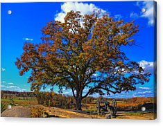 The Devils Den Witness Tree. Acrylic Print by Dave Sandt