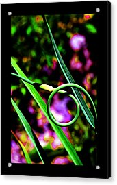 Acrylic Print featuring the photograph The Divine Cosmos Of Garlic by Susanne Still