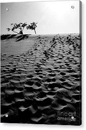 The Dunes At Dusk Acrylic Print by Tara Turner