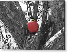 The Early Worm Gets The Apple Acrylic Print by Paul Louis Mosley