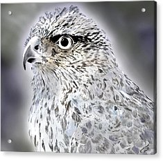 The Eye Of An Eagle  Acrylic Print by Yvonne Scott