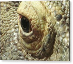 The Eye Of The Dragon Acrylic Print by Mark Armstrong