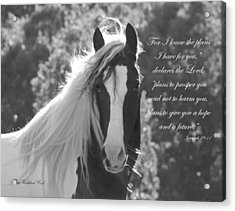 The Eyes Are The Window To The Soul Acrylic Print by Terry Kirkland Cook