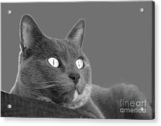 Acrylic Print featuring the photograph The Eyes Have It by Nareeta Martin