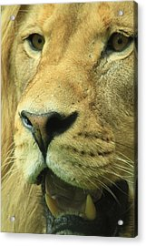 The Face Of God Acrylic Print by Laddie Halupa