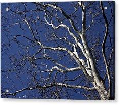 The Family Tree Acrylic Print by Ed Smith