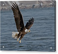 The Few   - The Proud Acrylic Print by Michael Rucci
