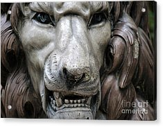 Acrylic Print featuring the photograph The Fierce Lion  by Kathy  White