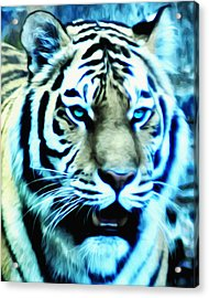 The Fierce Tiger Acrylic Print by Bill Cannon