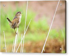 Acrylic Print featuring the photograph The Five Flies by I'ina Van Lawick