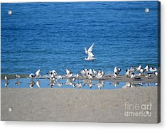 The Flock Acrylic Print by Brenda Alcorn