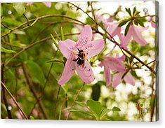 The Flower And The Bumble Bee Acrylic Print by J Jaiam