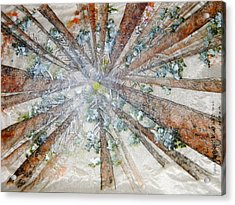 The Forest Converges Acrylic Print