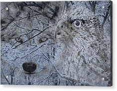 The Forest Has Eyes Acrylic Print by Yvonne Scott
