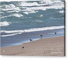 The Four Gulls Acrylic Print by Cedric Hampton