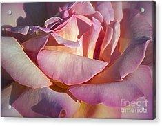 The Fragrance Acrylic Print by Gwyn Newcombe