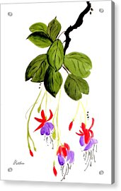 Acrylic Print featuring the painting The Fuschia by Alethea McKee