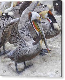 The Gathering  Acrylic Print by Judy Grant